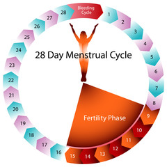 Menstrual Cycle Fertility Chart