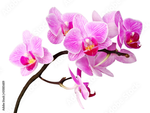 Fotobehang Orchidee isolated orchid