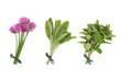 Chives, Sage and Oregano Herbs