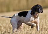 Hunting dog poster