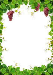 Grapevine frame with fresh pink grapes