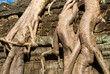 Detail of big      at Ta Prohm, Siem reap, Cambodia.