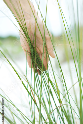 Hand touching dune grass, close-up