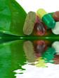 gélules comprimés et capsules sur feuille d'aloe vera vert