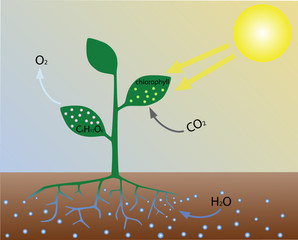 Photosynthesis (scheme)