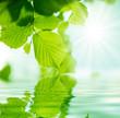 fondo con vegetacion y agua - 31114673
