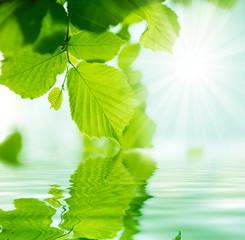 fondo con vegetacion y agua