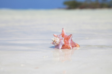 very sunny shell in the carribean sea