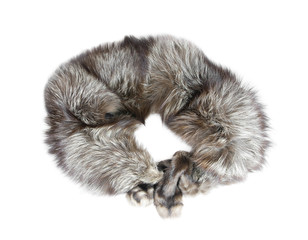 Collar of silver fox