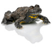 Yellow-Bellied Toad, Bombina variegata