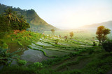 Fototapety Bali