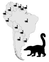 Nasenbär Verbreitung Südamerika