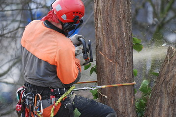 Baumkletterer Baum fällen