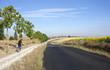 Постер, плакат: In bici tra i campi di girasoli