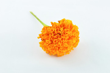 Orange Marigold (Tagetes) Flower isolated on white background