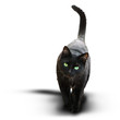 Schwarze Katze
