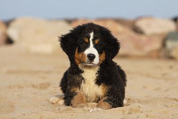 jeune chien sur le sable de la plage en vacances