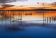 los patos y el lago