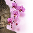 Fototapeten,buddhas,orchid,wohlbefinden,zen