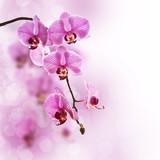 Fototapety Orchidée rose, fond pastel