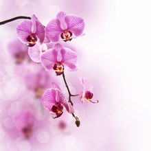 Orchidée rose, fond pastel