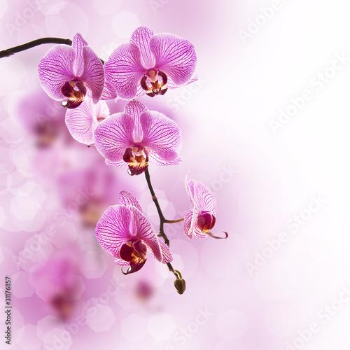 Fototapeten,orchidee,rose,blume,weiß