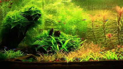 Natural Aquarium. Part 4