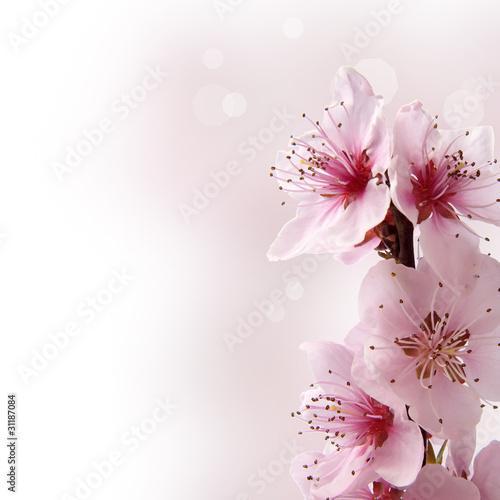 fiori di pesco con sfondo sfumato rosa
