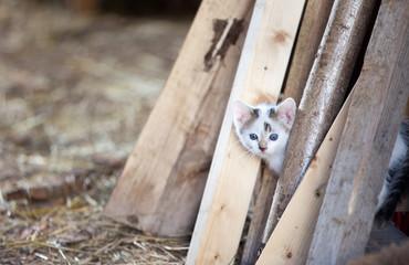 Kätzchen hinter Holzstapel