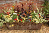 Flowers in Old Trough