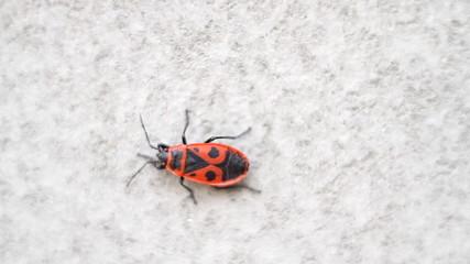 Firebug sits on cement wall