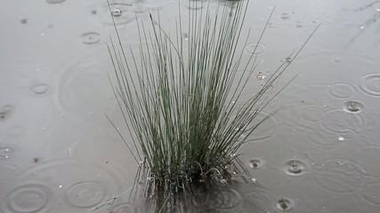 Lluvia en el rio