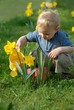 Cute blond child watering some plants