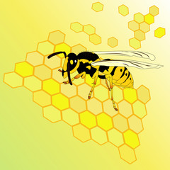 vector illustration with wasp