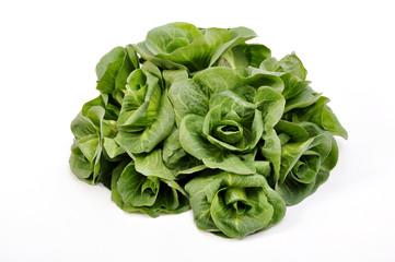 radicchio verdon verdura alimentazione cibo vegetariano