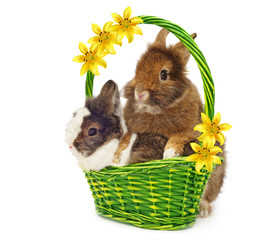 rabbits in basket with yellow lilys