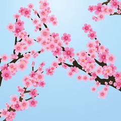 Cherry blossom, flowers of sakura, tree brunch, blue sky