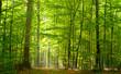Leinwandbild Motiv Grüner Laubwald