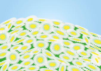 Green field with chamomile flowers and blue sky, vector