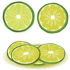 lime vector illustration with slices