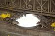 Rats sacrés dans un temple - Inde