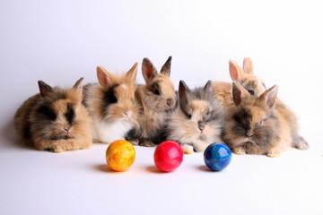 Sechs Kaninchen