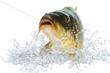 Fische 99