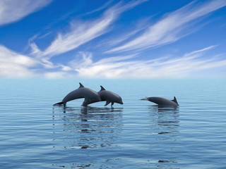 Three dolphins.