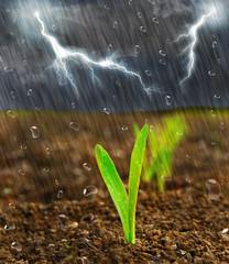 Ackerregen
