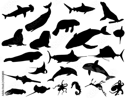 Fototapeta sea animals