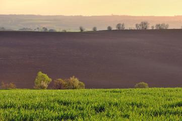 paysage champetre
