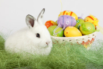 Cute bunny with Easter eggs, sitting on grass