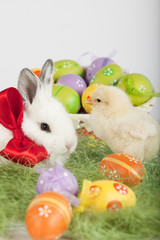Cute bunny and small baby chicken, surrounded by Easter eggs
