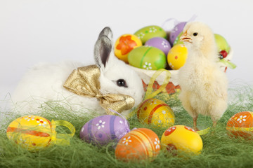 Baby chicken l and white bunny surrounded by Easter eggs